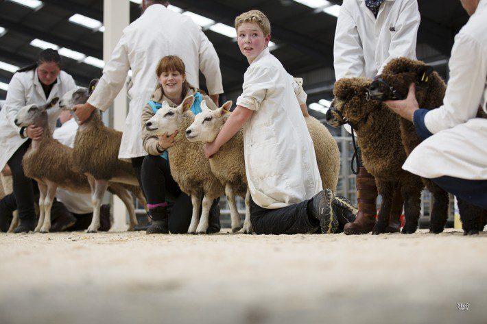 Butchers lambs